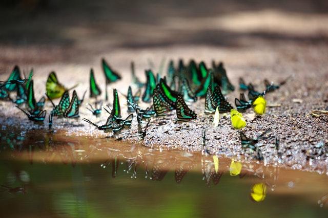 Bin, fjärilar och deras livsmiljö